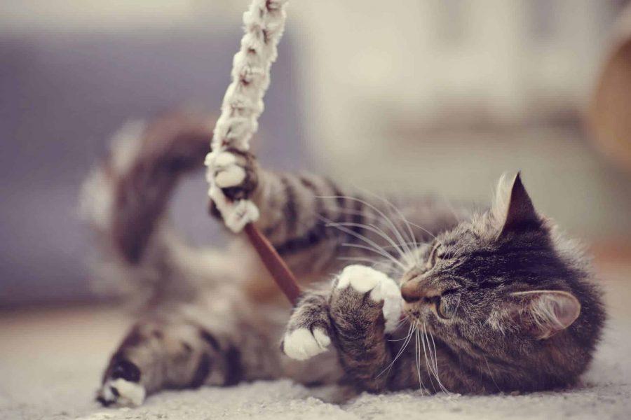 Des idées de jouets pour ton chat