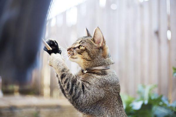 Stimuler son chat à la vie en extérieur