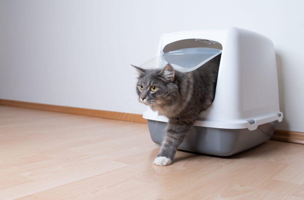 Chat qui utilise son bac à litière fermé