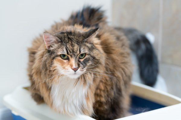 Bac à litière du chat : lequel choisir, où l'installer et quelle litière utiliser ?