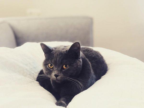Coryza du chat : infos, conseils et traitement