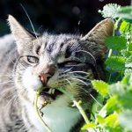 Mon chat mange de l'herbe, que faire ?