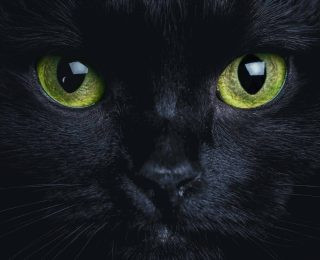 8 raisons d'adopter un chat noir