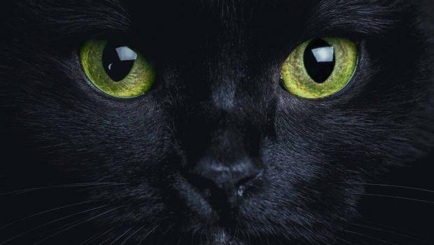 Adopter un chat noir, 8 raisons de craquer