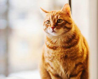 Assurer plusieurs animaux : avantages et fonctionnement