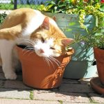 Pourquoi mon chat aime l'herbe à chat ?
