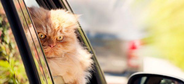8 choses que les chats détestent