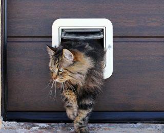 Mon chat a peur de la chatière : que faire ?