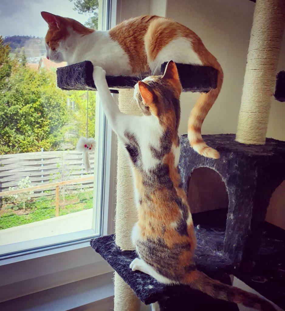 2 chats dans un arbre à chat