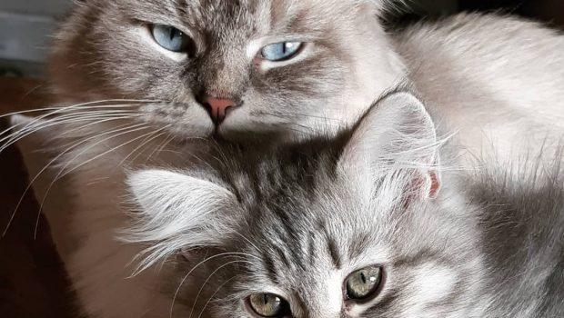Que couvre une assurance chat ?