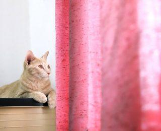 Mon chat grimpe aux rideaux : que faire ?