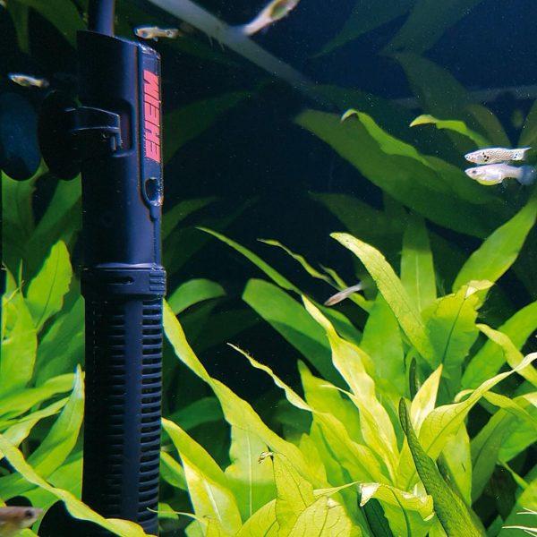 Chauffage pour aquarium : conseils, infos et prix