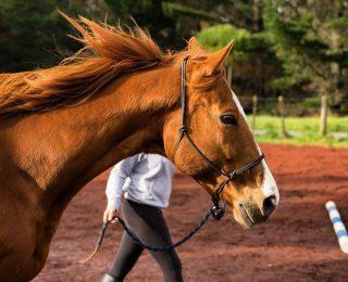 Soins du cheval : comment le soigner au quotidien ?