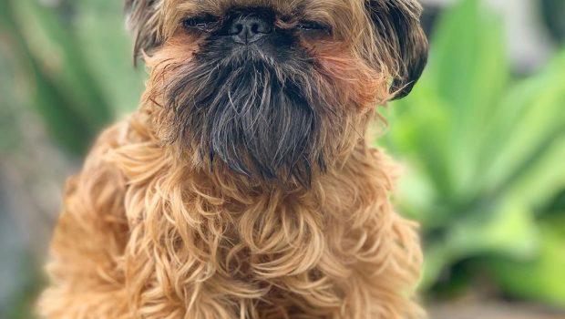 Noms de chiens en R – Lettre 2020