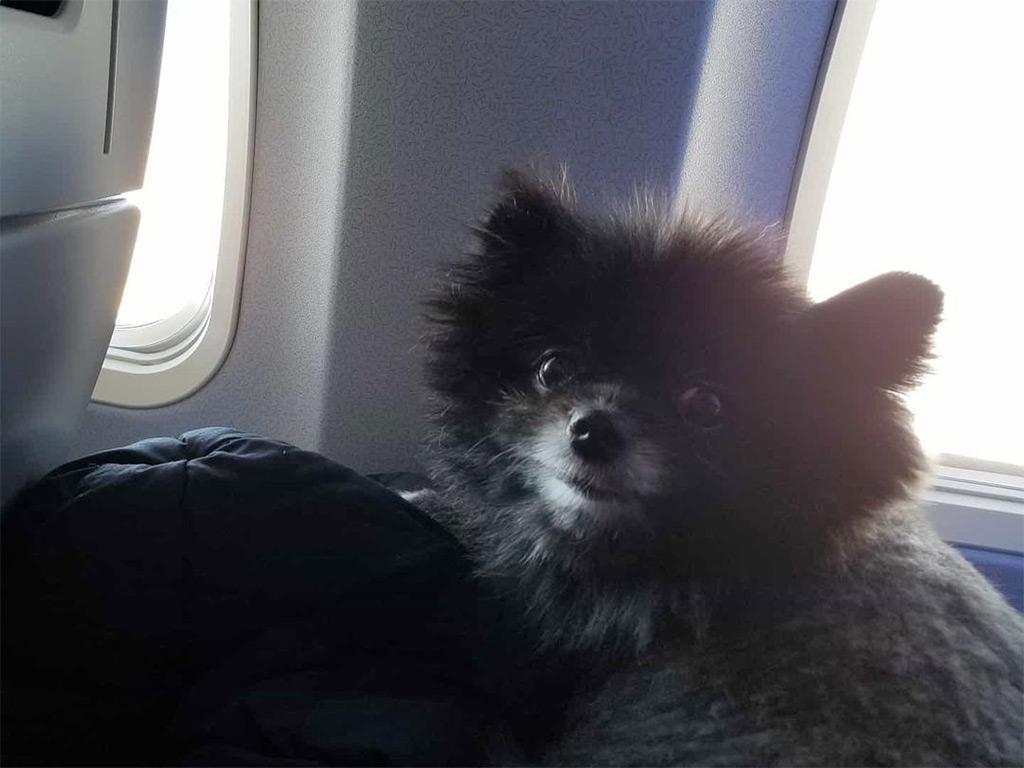 chien dans un sac de transport à bord d'un avion