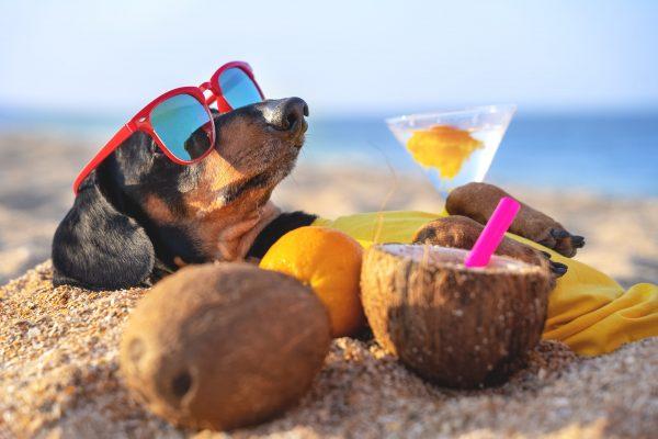 Préparer les vacances d'été avec votre chien