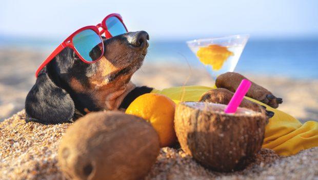 Comment préparer vos vacances avec votre chien ?