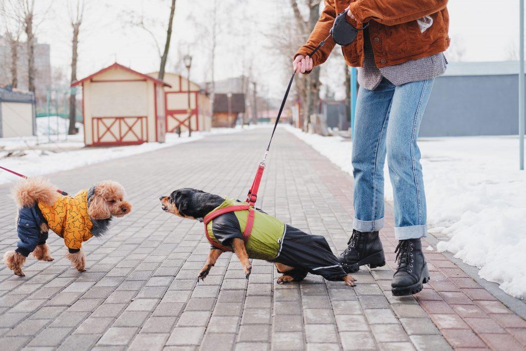 chien quie aboie apres un autre chien