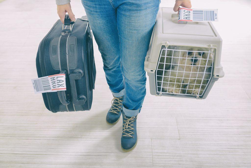 chien à l'aéroport dans une cage