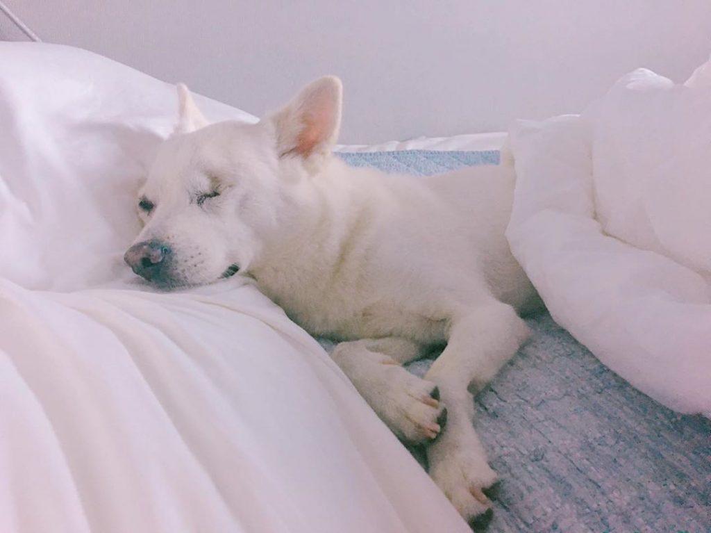 chien âgé dort