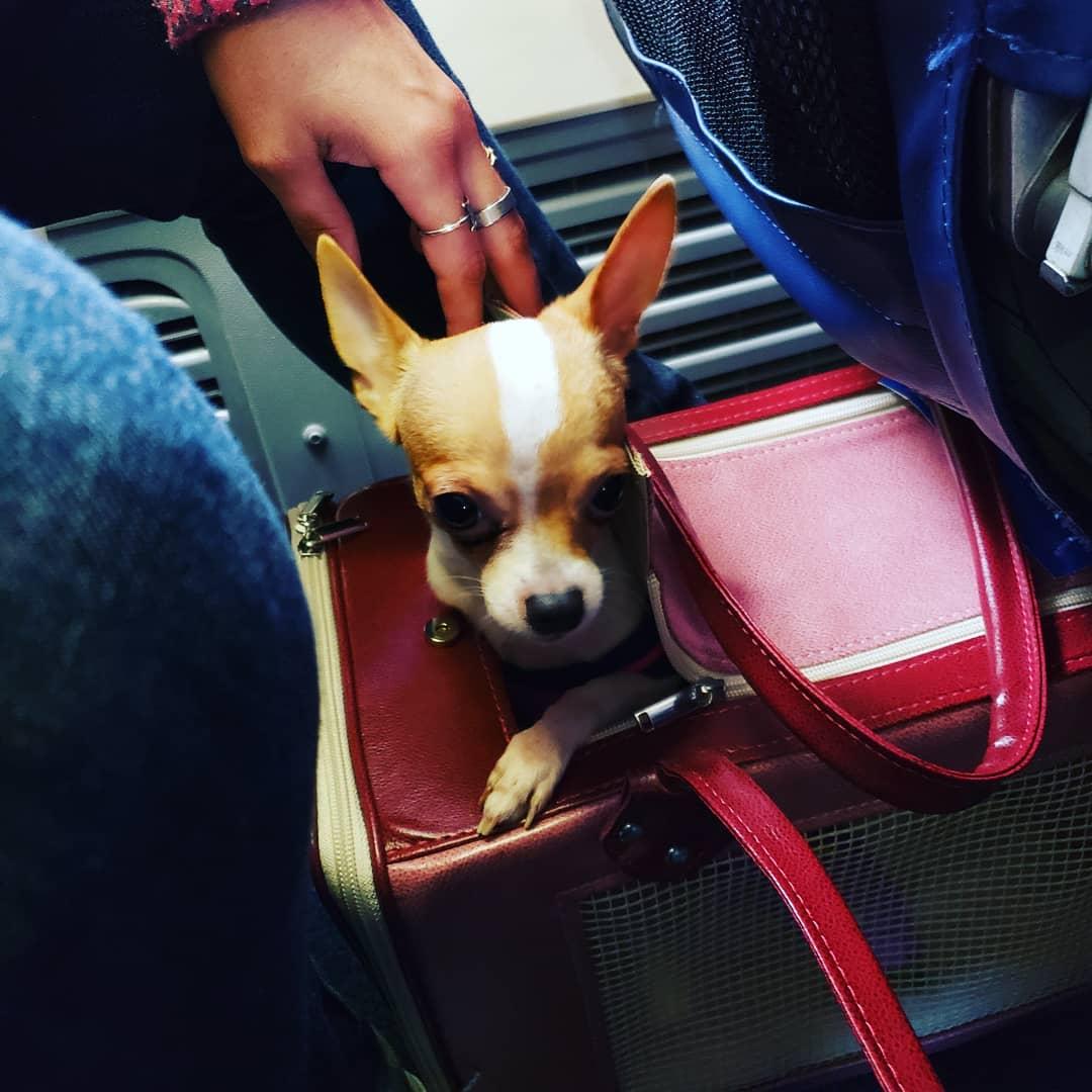 chien en cabine