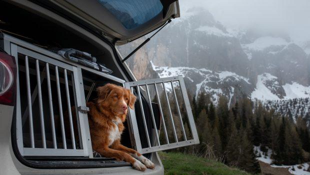 Transporter votre chien en voiture