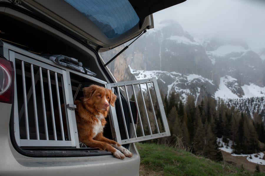 Voyager avec son chien en voiture, camping-car, van