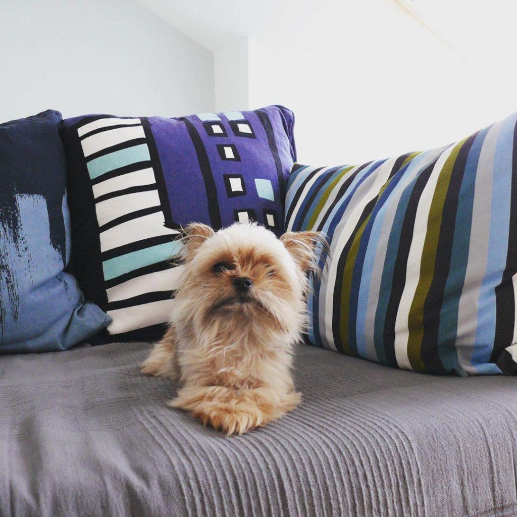 chambre airbnb et chiens