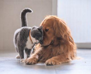 Comment résilier votre assurance pour chiens et chats ?
