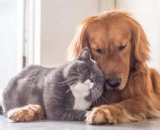 Comment habituer un chien à un chat