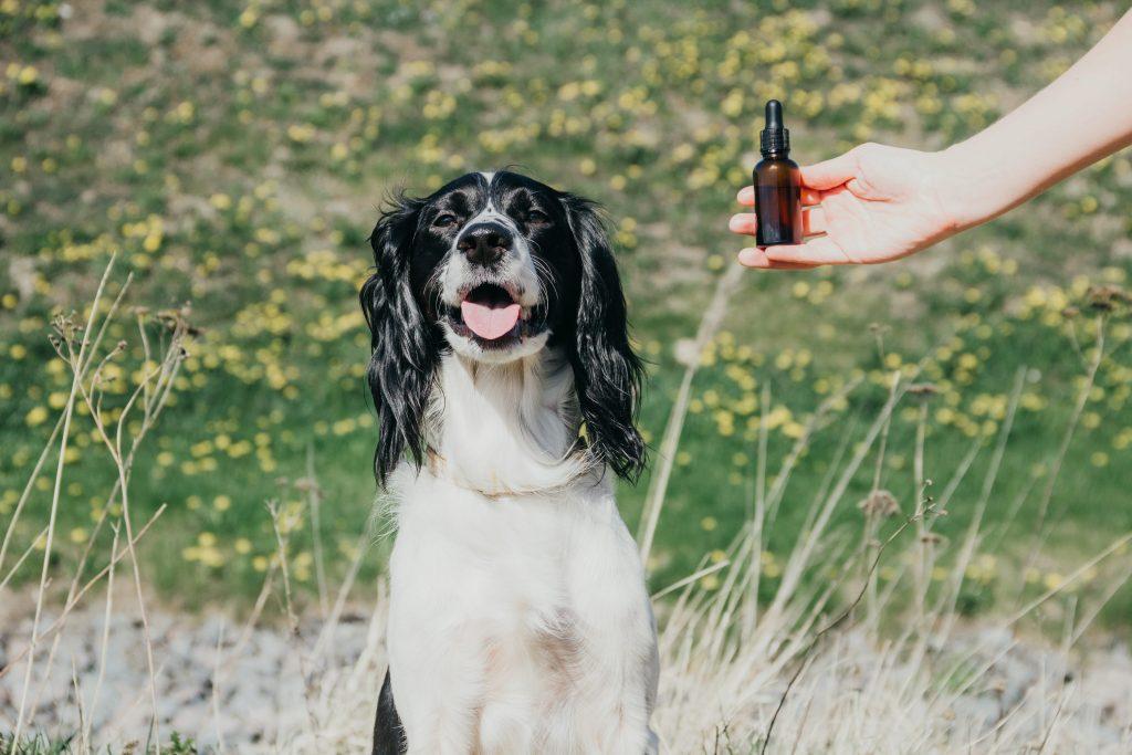 Huiles essentielles en flacon avec un chien qui sourit