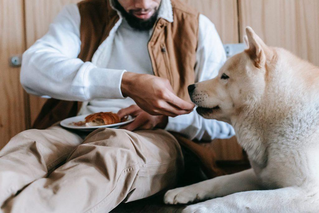 chien qui mange un reste que son maître lui donne