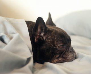 L'hypoglycémie chez le chien : causes, symptômes et traitement