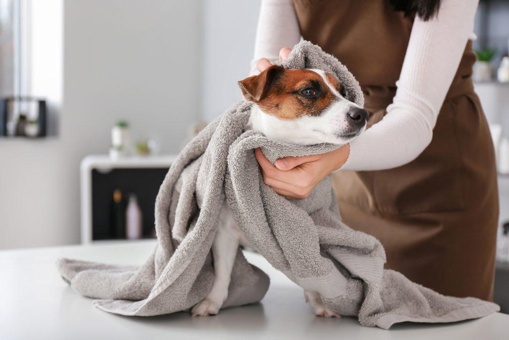 chien mouillé dans une serviette