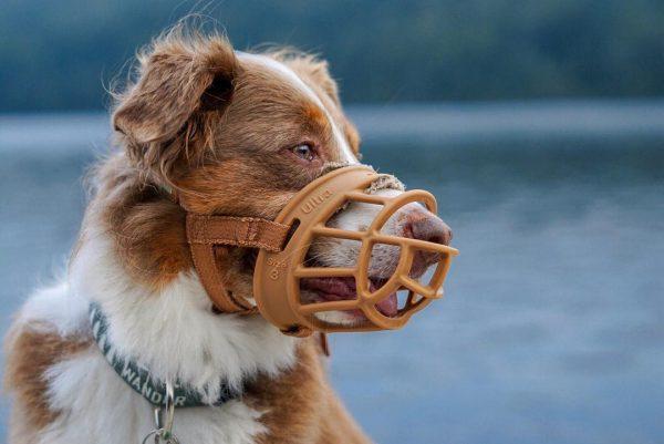 Quelle muselière pour son chien ?