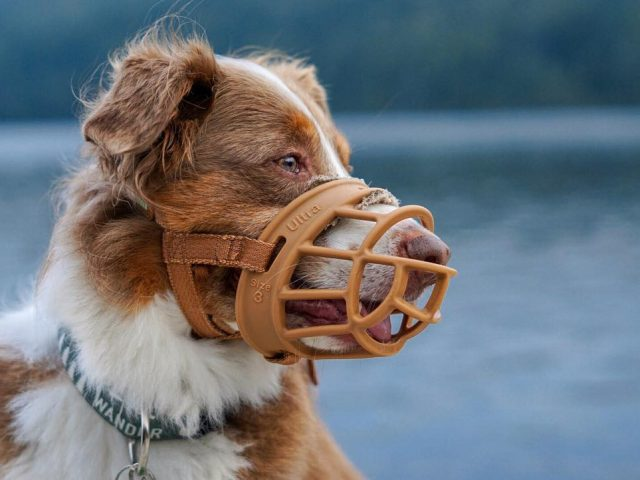 Quelle muselière pour mon chien ?