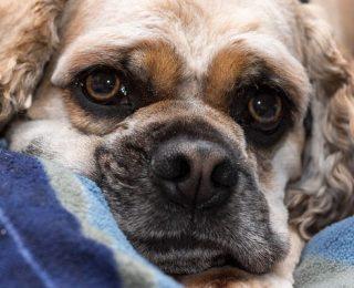 La punition chez le chien