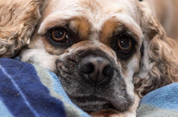 punir son chien infos et conseils sur la punition. Black Bedroom Furniture Sets. Home Design Ideas