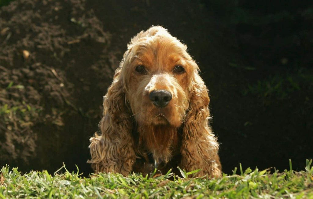 chien dans un trou