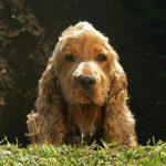 Mon chien creuse des trous : que faire ?