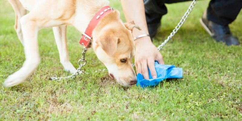 Pourquoi mon chien mange-t-il des excréments et crottes ?