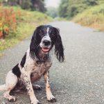 Assurance chien : les conditions à connaître
