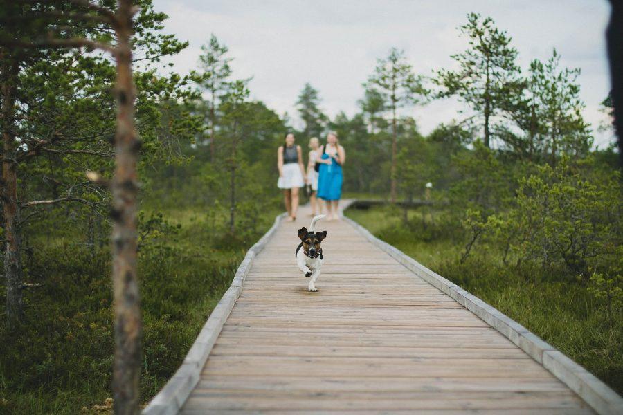 Activités à faire avec son chien : 15 idées pour ne pas s'ennuyer