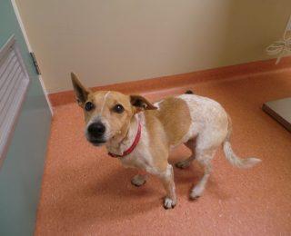 Mon chien tremble : causes et traitement