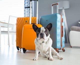 Comment bien organiser un voyage avec votre chien