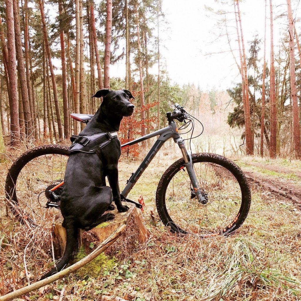 chien forêt vélo