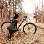 Faire du vélo avec son chien : de la balade à l'entraînement sportif