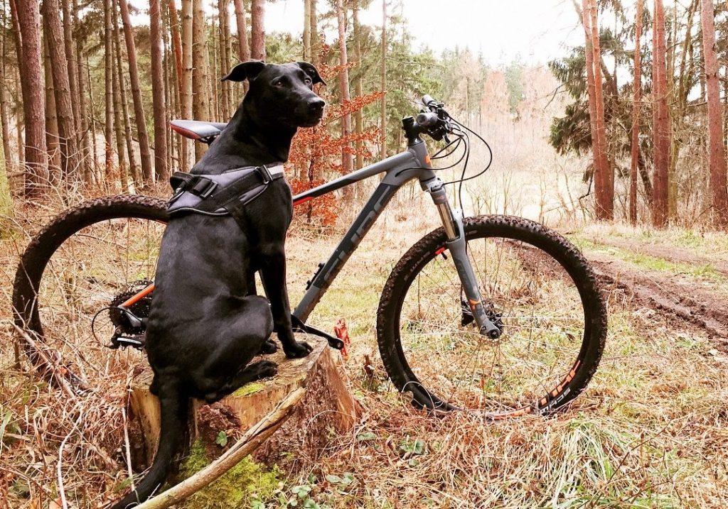 Chien dans les bois à côté du vélo de son maître