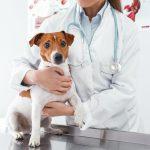 Peur du vétérinaire : comment calmer son chien ?