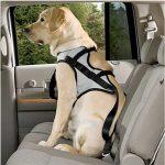 Transporter son chien en voiture